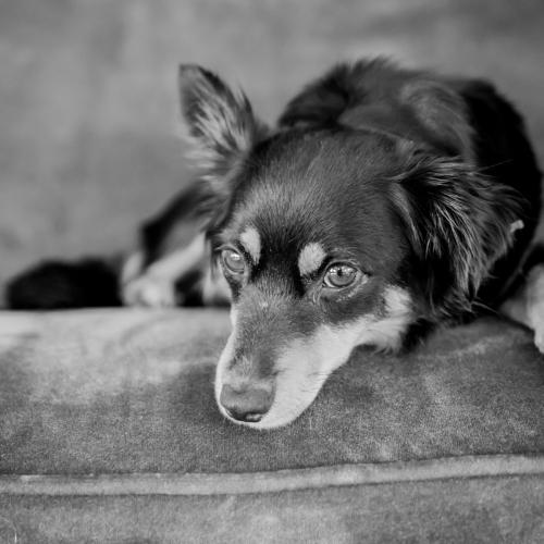 Der Hund von Mena Zoo spielt zwar im Stück keine Rolle, ist aber bei jeder Probe dabei.